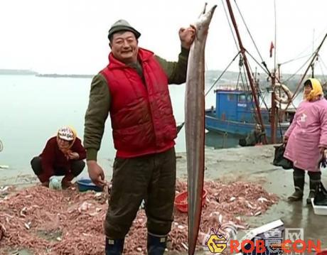 Ông Yan và con lươn biển khổng lồ.